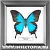 Insectopia.ru - бабочки и жуки в рамках