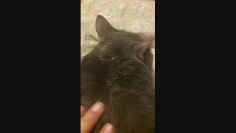 Live: Кошка Роза. Личная жизнь