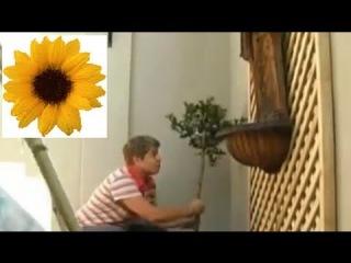 Как обустроить внутренний дворик? Часть 2. Секреты Садовода. Дача ТВ