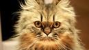 🔴 Смешные КОТЫ и КОШКИ. Приколы для детей и взрослых