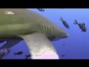 Подводный мир необычные обитатели океана