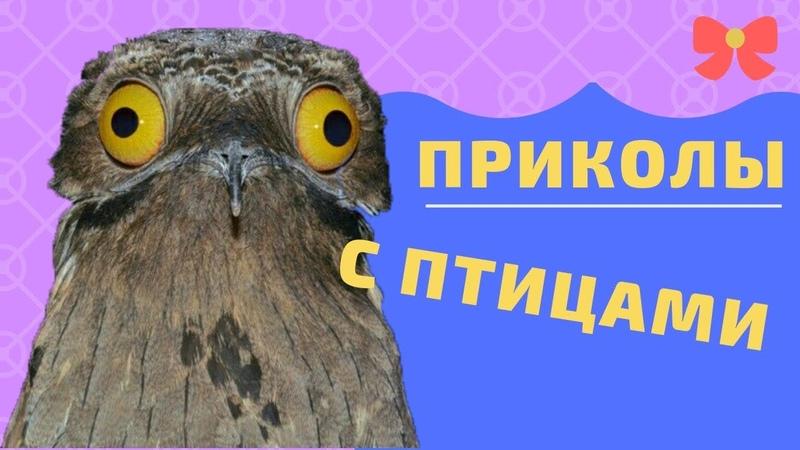 Приколы с птицами. Попробуй не засмеяться