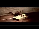Сыр Cheddar - Реклама - Мышь в мышеловке - прикол Ночь пожирателей рекламы