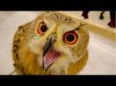 フクロウカフェ「フクロウのみせ大阪店」が大阪南森町にオープン!!&#12