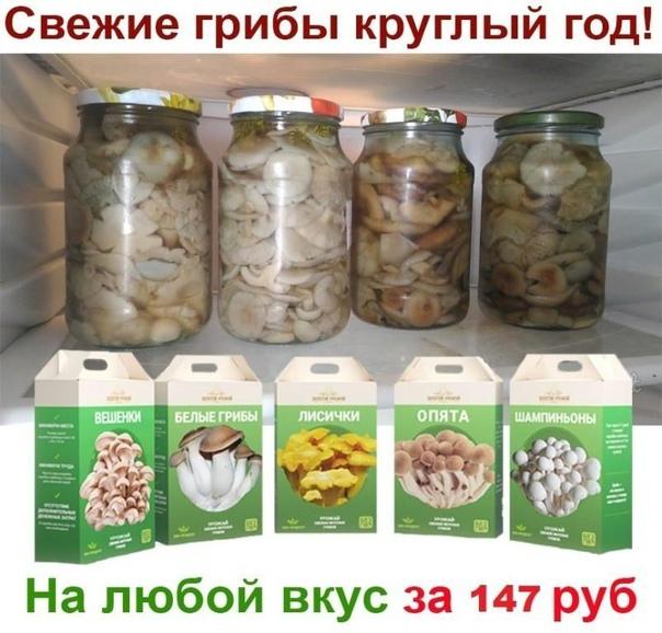 как можно вкусно и с пользой экономить финские грибницы грибной сезон с вешенками, опятами, лисичками и другими грибами -
