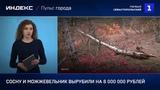 Сосну и можжевельник вырубили на 8 000 000 рублеи