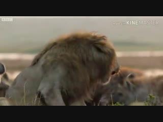 Если даже ты лев,бывает так что тебе необходим брат ☝