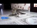 Милые котята играют друг с другом.