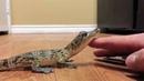Wild Life 🔴 Awesome Wild Animals Videos Compilation (2018) Animales Salvajes Video Recopilacion
