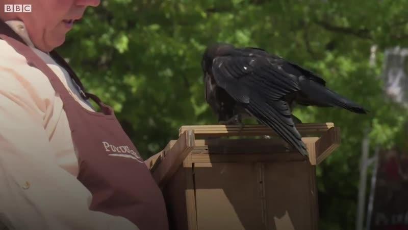Во французском парке грачей научили собирать мусор и окурки.