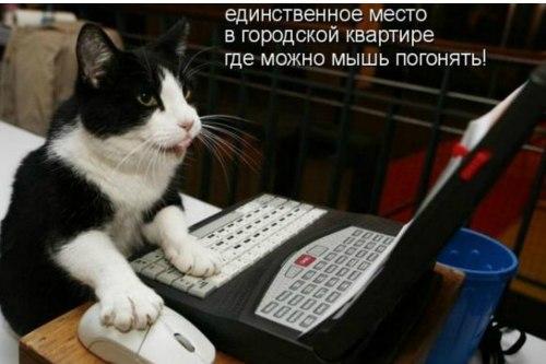 Фото №304586865 со страницы Алексея Ткачева