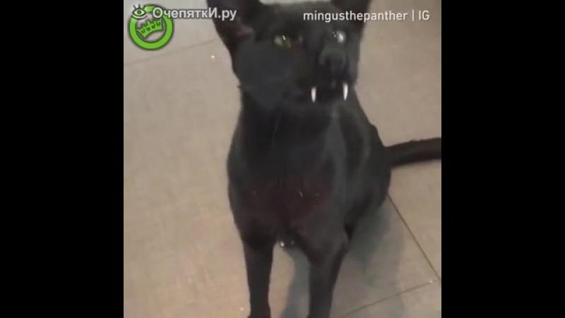 Саблезубый котик.mp4
