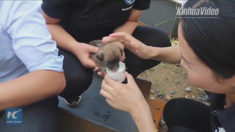 Пожарные пришли на помощь оказавшимся в беде собаке и щенкам