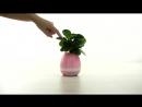 Smart Musical Flower Pod - Музыкальный горшок для цветов