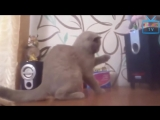 Top 50 Funny Cats And Dogs Dancing To Music Of All Time.mp4