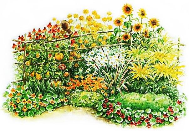 Клумба непрерывного цветения схема