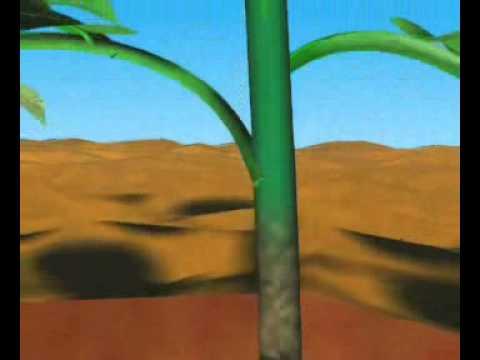 Передвижение веществ по растению