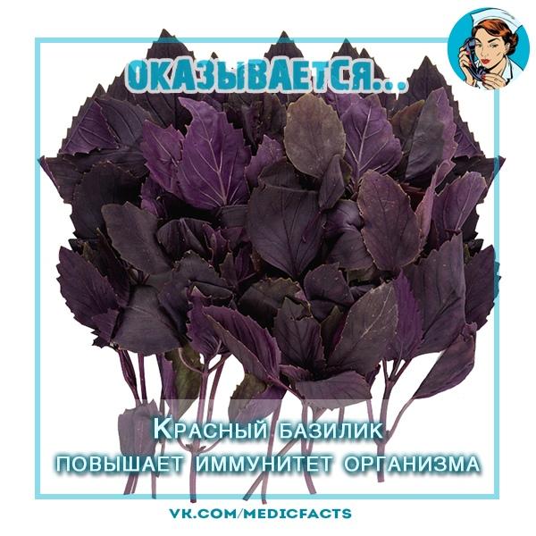 https://pp.userapi.com/c849332/v849332608/31f1a/VzDqt6R5a6E.jpg