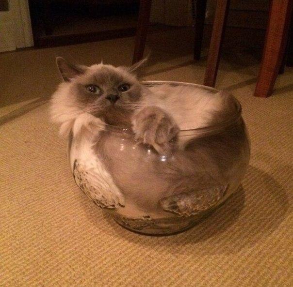 Доказательство того, что коты - жидкость!, прикол девушке на
