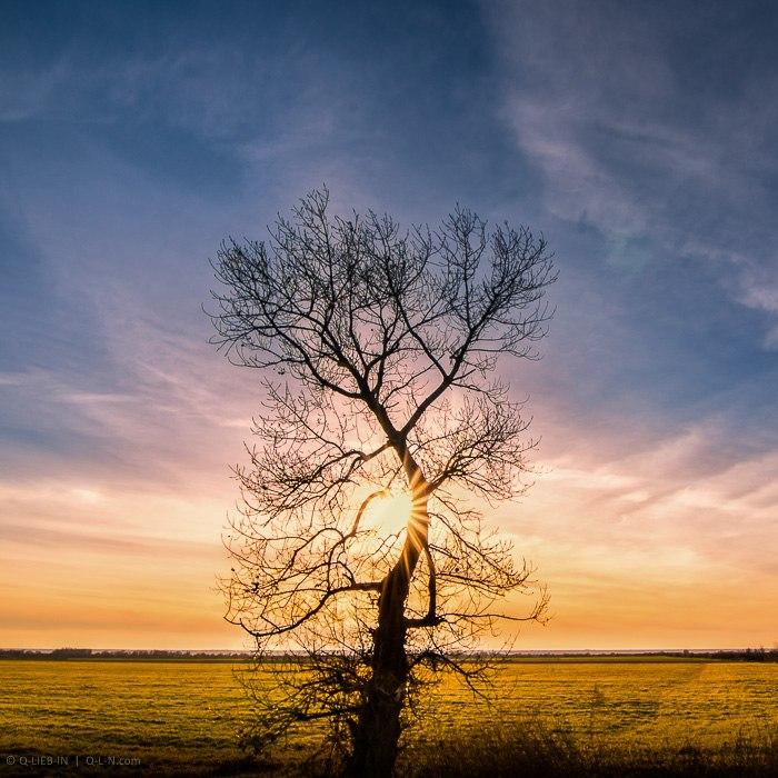 Одинокое дерево на закате