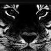 "[3D-Боец]Элитный клан""World Tiger""[WT]"
