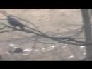 ха-ха-ха хит -анжела-пишет ПРОРОК САН БОЙ когда собака ждала кошку на дереве.а ворона наблюдала [Low, 240p]