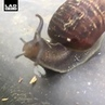 Wiggly Snail