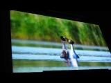 М.С. Родионов  Презентация документальных фильмов «Птицы и люди» часть-2