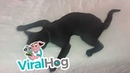 Cat Snoozes Sprawled Out || ViralHog