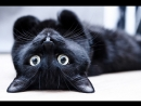 клип Черный кот