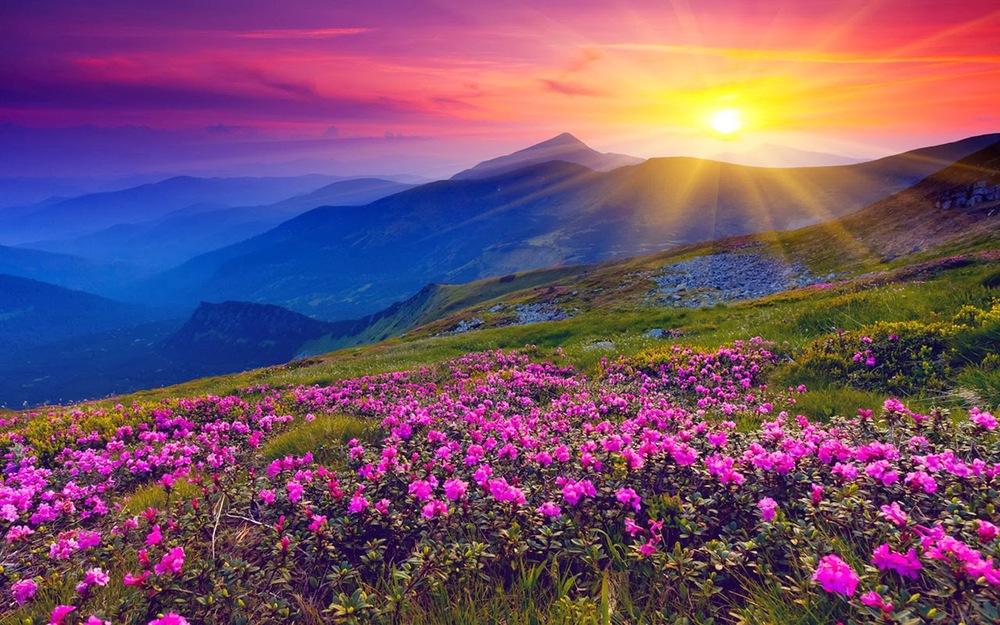 Национальный парк Долины цветов, Уттаракханд