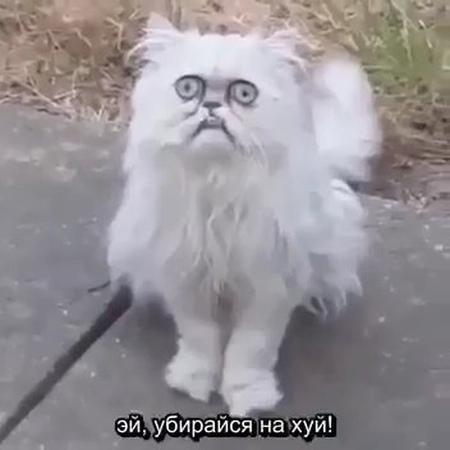 кот похожий на бабушку