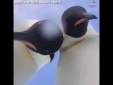 Эффектное селфи пингвинов