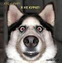 Михаил ******, 29 ноября 1987, Тюмень, id552534
