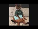 Классные приколы про животных. Смешная подборка с котами и кошками. Самые смешные видео