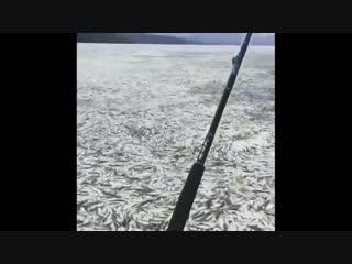 Море рыбы vjht hs,s