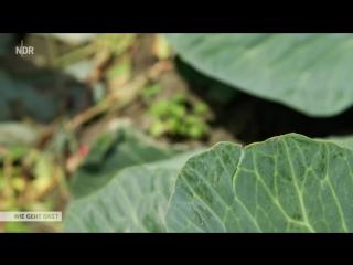 Kohlanbau der Superlative - Wie geht das- - NDR