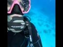 дайвинг 1 раз на красном море