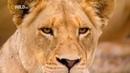 Прирожденные короли Проект Nat Geo Wild