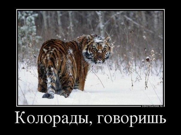 Реальное влияние на политическую ситуацию имеет тот, кто сейчас в эпицентре событий на Востоке Украины, - политолог - Цензор.НЕТ 9624