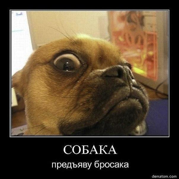 собака-предъяву бросака