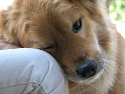 Если вы подберете голодную собаку и устроите ей роскошную жизнь - она никогда не укусит вас. В этом главное отличие собаки от человека. Марк Твен