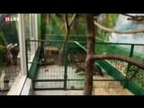 Ленивец, которому дарят розы