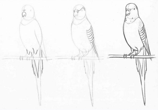 Как рисовать калл поэтапно