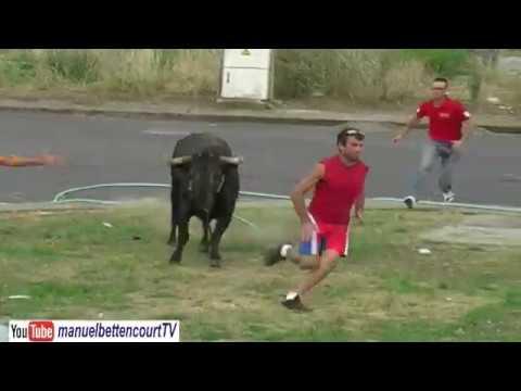 Festas e Touradas Tradicionais Traditional Bull fight Festival Terceira Island Azores