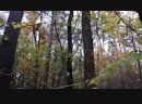 Белка в треугольном лесу г Жуковский