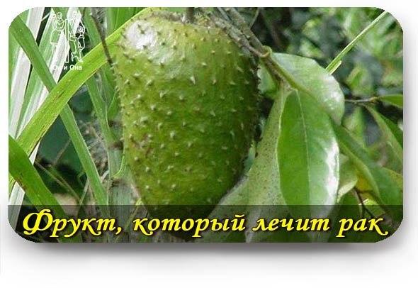 http://cs322119.vk.me/v322119453/6e0e/DWseIWPEJ_s.jpg