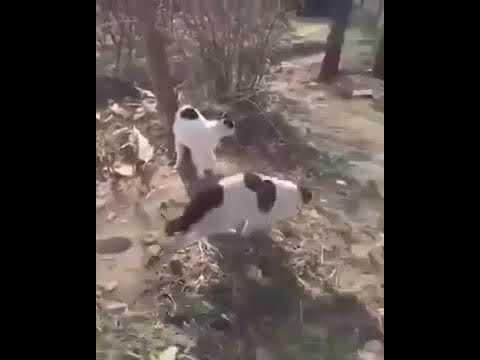 Нападение стаи кошек на старика. Полная версия.
