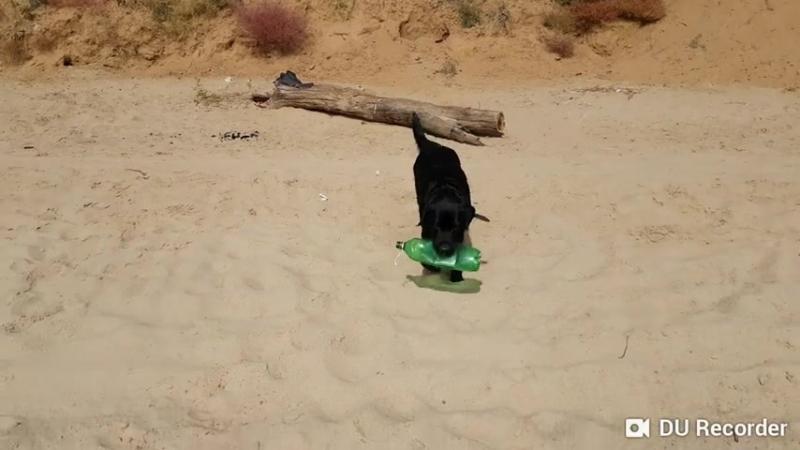 Собака помогает убрать мусор / Тольятти
