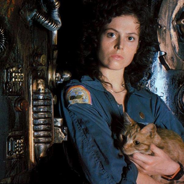 25 интересных фактов о фильме Чужой. Невероятный фильм ужасов, космическая сага и целая вселенная вокруг одного персонажа. Фильм «Чужой» создал новый образ, который вошел в историю кино. Также